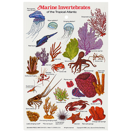 Field Card Guide Invertebrates Marine
