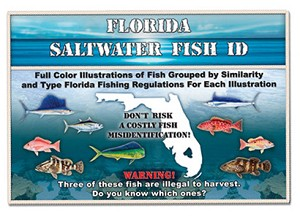 Florida saltwater fish id book for Florida saltwater fish size limits