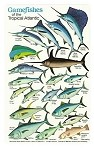 Game Fish Field Guide Card
