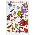 Marine Invertebrates Field Guide Card